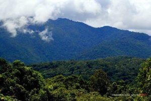 Hutan Malamoi